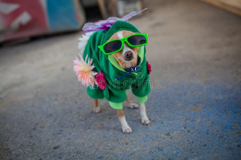 Hond in kostuum stock afbeelding