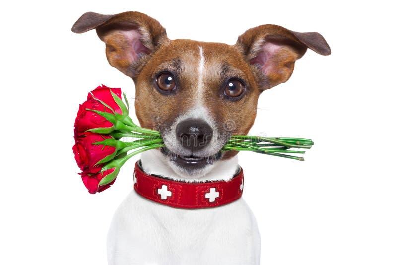 Hond in liefde royalty-vrije stock afbeeldingen