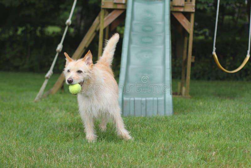 Hond met bal in playgruond stock fotografie