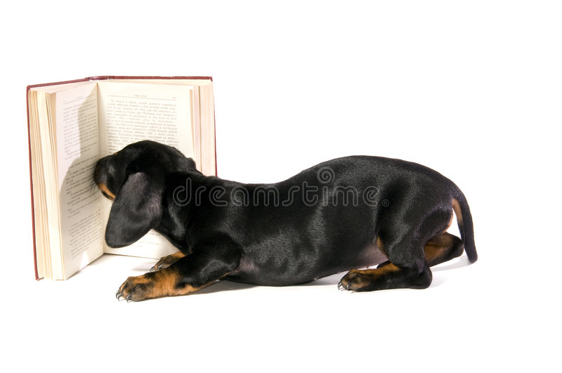 Hond met boek royalty-vrije stock foto