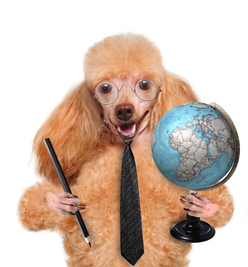 Hond met bol royalty-vrije stock fotografie