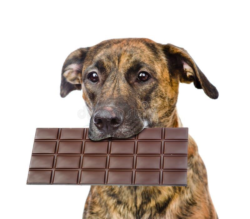 Hond met chocolade in de mond Geïsoleerdj op witte achtergrond royalty-vrije stock foto