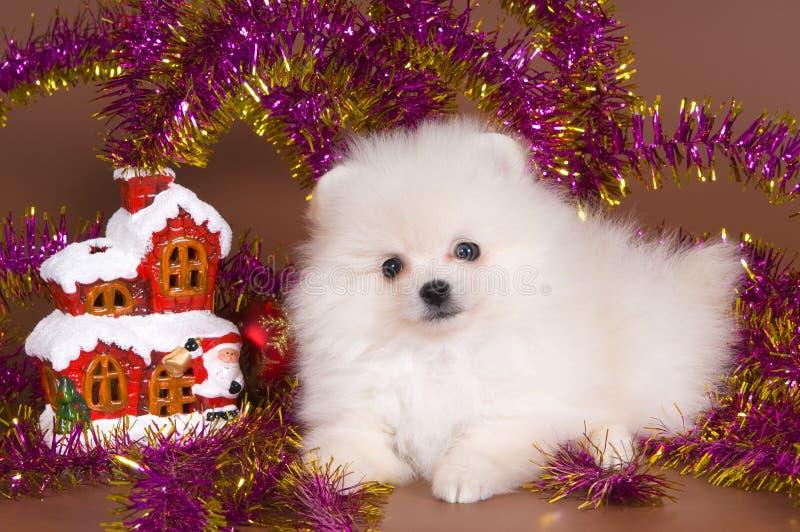 Hond met de decoratie van Kerstmis royalty-vrije stock foto's