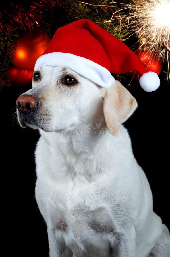 Hond met de hoed van de Kerstman royalty-vrije stock afbeeldingen