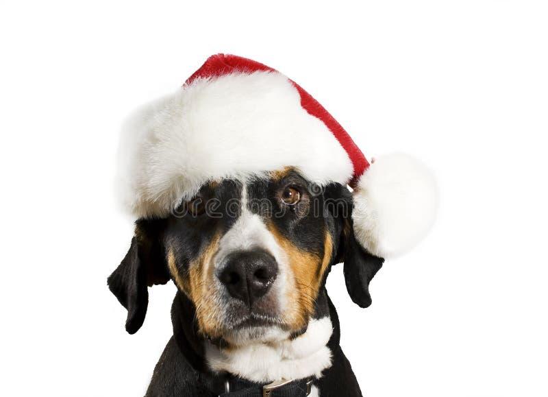 Hond met de hoed van Kerstmis stock afbeeldingen