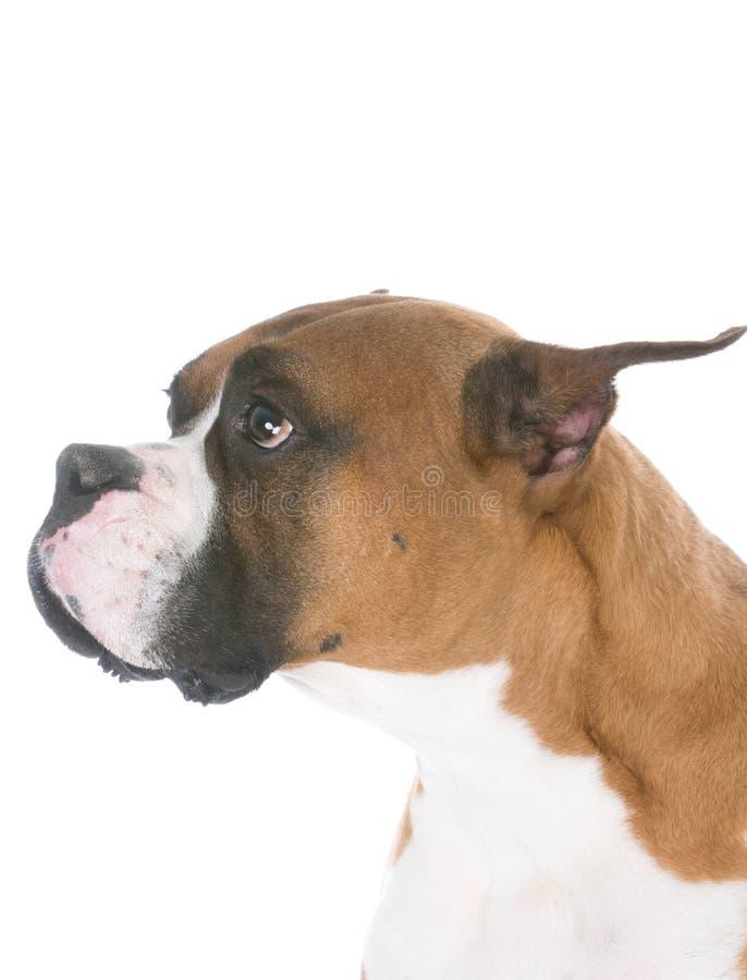 Hond met droevige uitdrukking royalty-vrije stock afbeeldingen