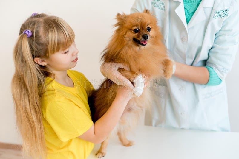 Hond met een dierenarts royalty-vrije stock foto's
