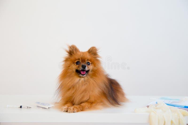 Hond met een dierenarts stock afbeeldingen