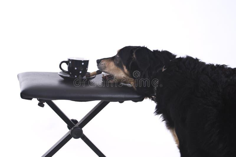 Hond met een kop van koffie royalty-vrije stock afbeeldingen