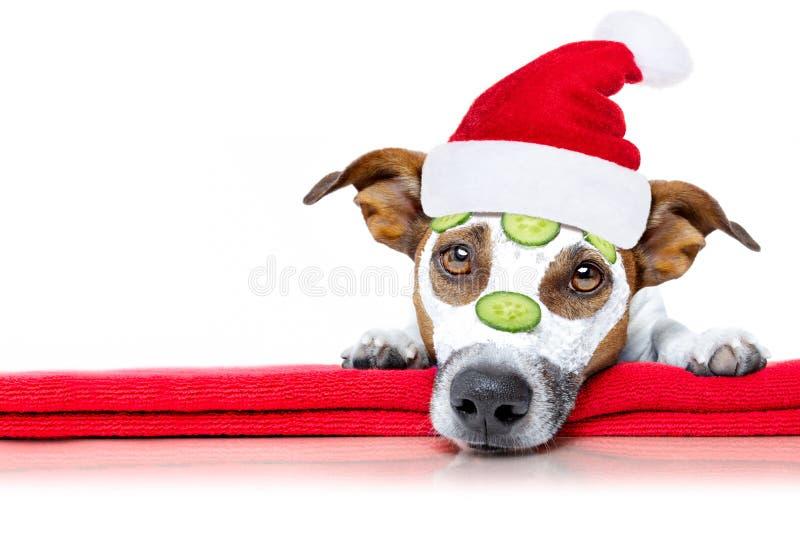 Hond met een schoonheid mask wellness spa stock foto