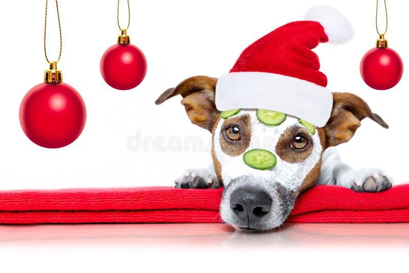 Hond met een schoonheid mask wellness spa stock foto's