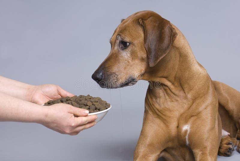 Hond met een volledige voedselkom stock afbeelding