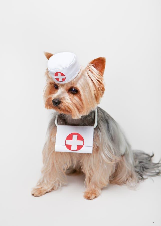Hond met eerste hulpuitrusting in een wit GLB met medische symbolen stock fotografie