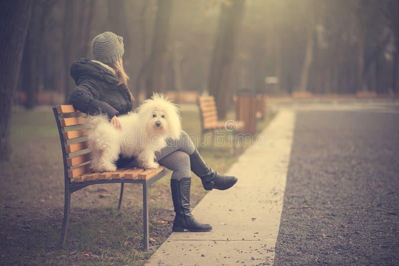 Hond met eigenaar in het park stock afbeeldingen