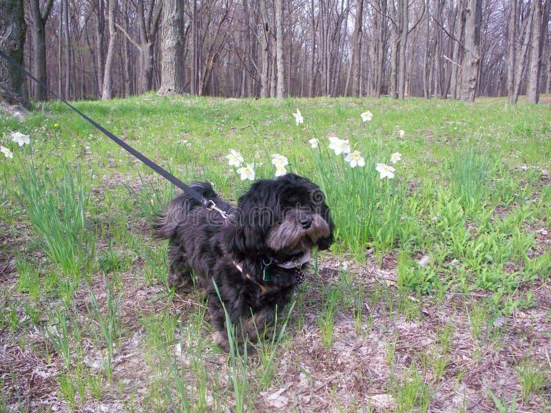 Hond met Gele narcissen royalty-vrije stock foto