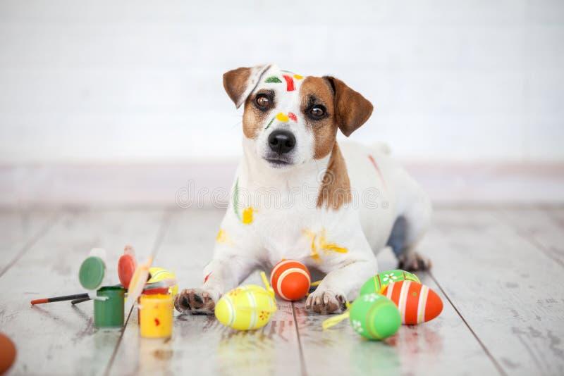 Hond met geschilderde paaseieren royalty-vrije stock fotografie