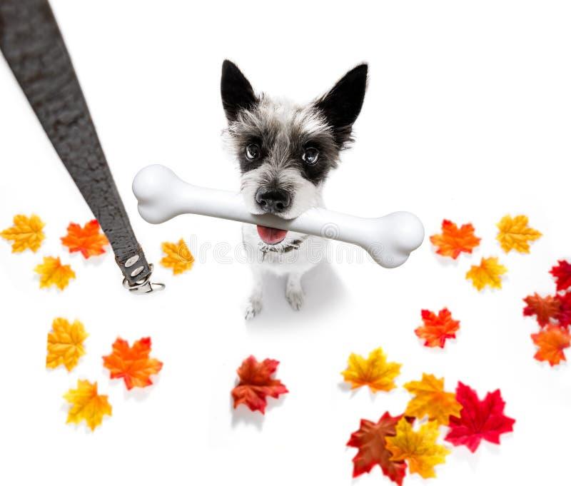 Hond met Groot Been stock afbeelding