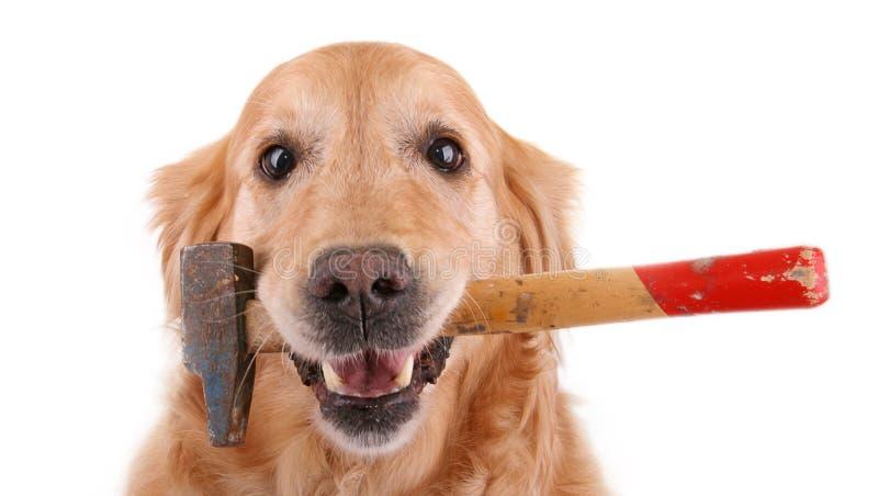 Hond met hamer royalty-vrije stock afbeelding