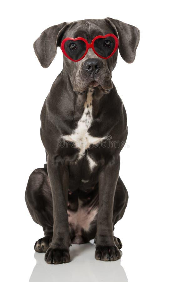 Download Hond met hartglazen stock foto. Afbeelding bestaande uit camera - 54089388