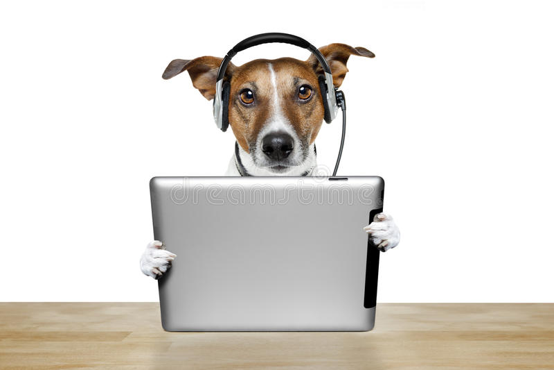 Hond met ipad stock afbeelding