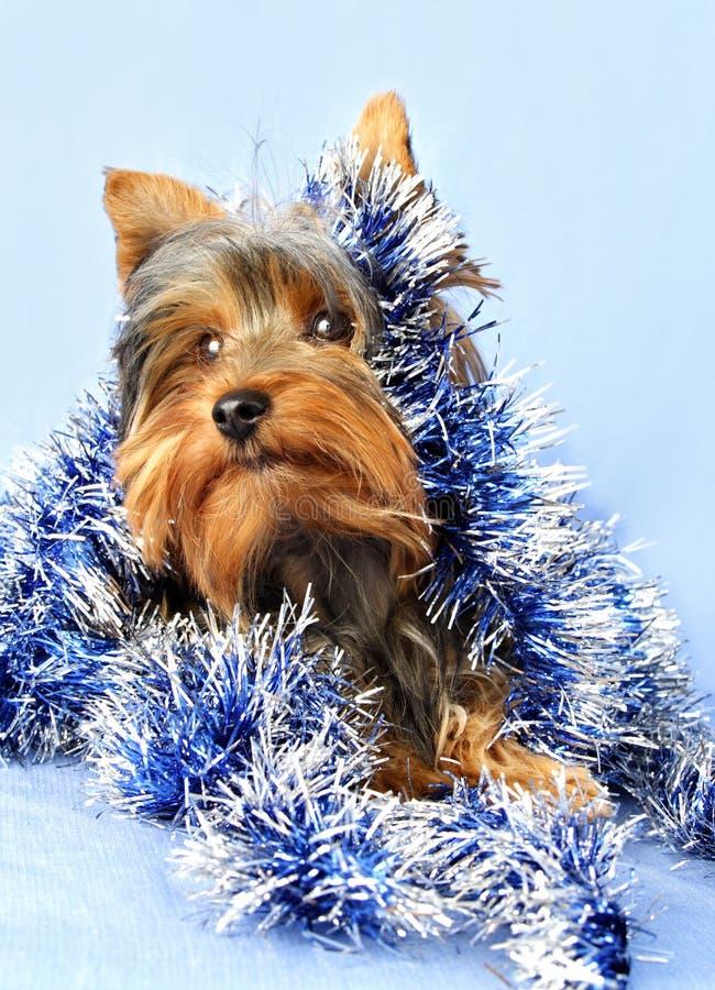 Hond met Kerstmisslinger royalty-vrije stock afbeelding