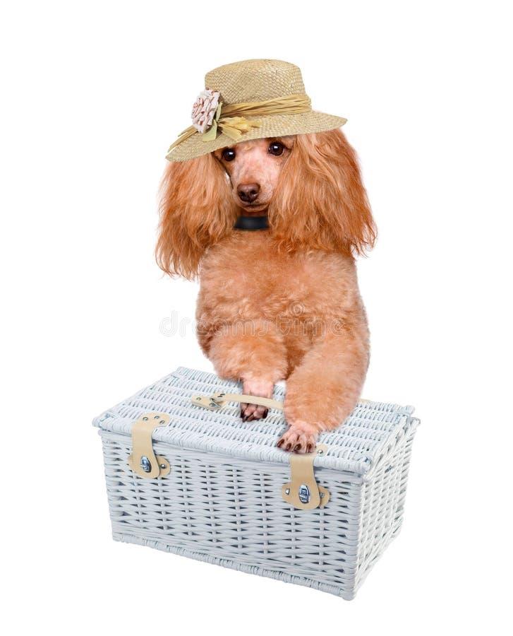 Download Hond met Picknickmand stock afbeelding. Afbeelding bestaande uit bistro - 39100501