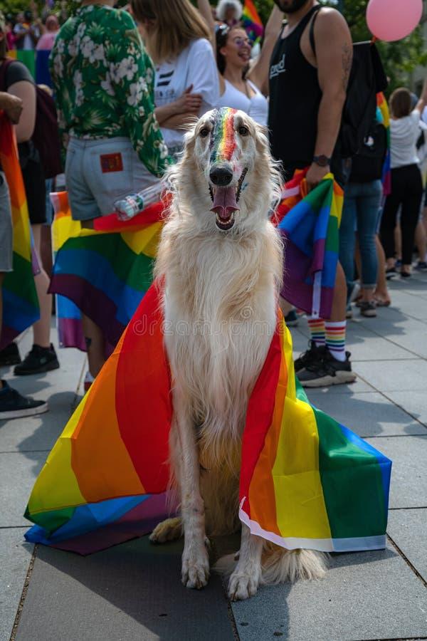 Hond met regenboogvlag bij Baltische Trotsgebeurtenis die wordt behandeld Vrolijke die vlag op hondenneus wordt geschilderd tijde stock afbeeldingen
