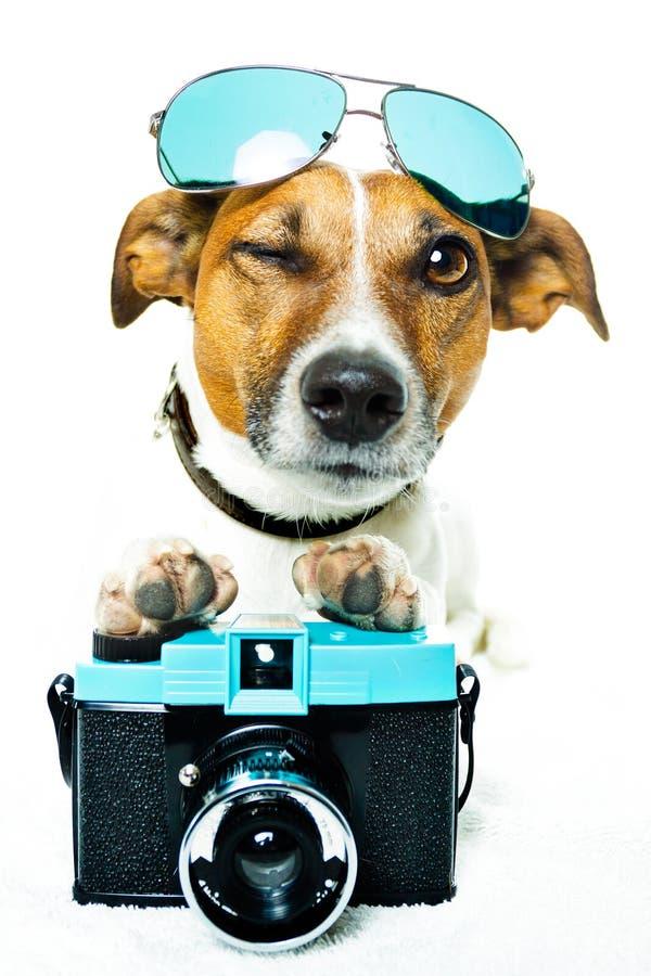 Hond met schaduwen en een fotocamera