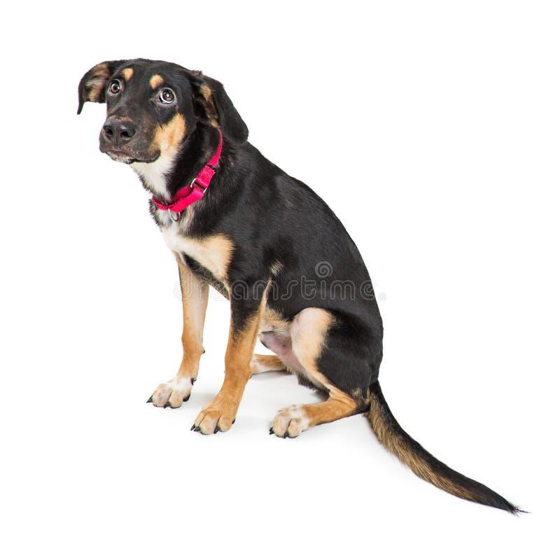 Hond met Schuldige Droevige Uitdrukking die omhoog eruit zien royalty-vrije stock foto's