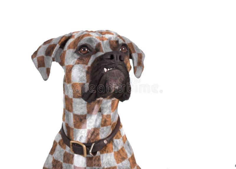 Hond met stijl royalty-vrije stock fotografie
