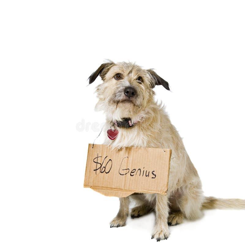 Hond met teken het hangen stock afbeeldingen