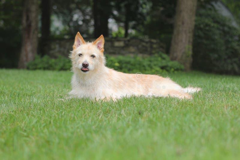 Hond met tong royalty-vrije stock afbeeldingen