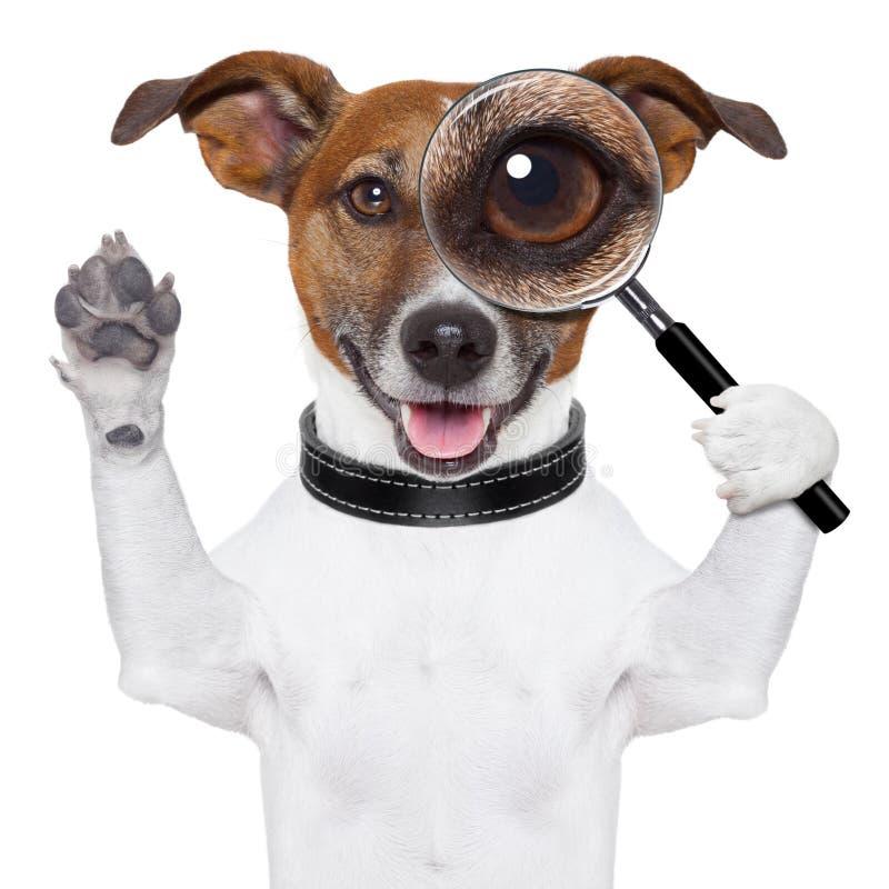 Hond met vergrootglas stock fotografie