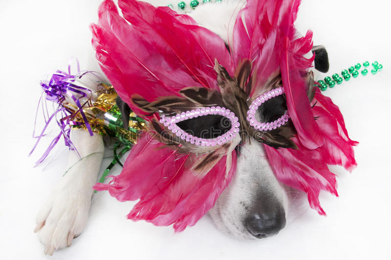 Hond na partij royalty-vrije stock afbeeldingen