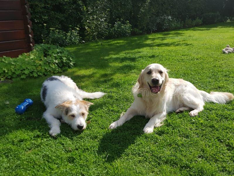 Hond in Natur royalty-vrije stock foto