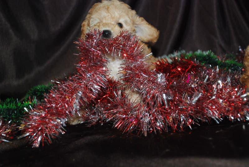 Hond, Nieuwjaar stock afbeelding