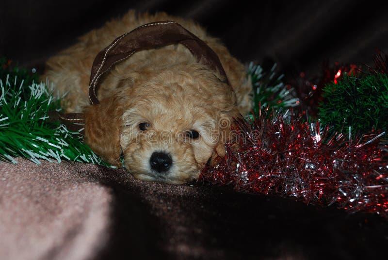 Hond, Nieuwjaar royalty-vrije stock fotografie