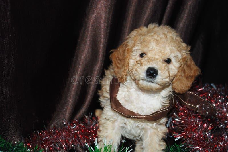 Hond, Nieuwjaar royalty-vrije stock foto's