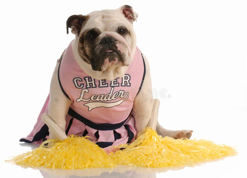 Hond omhoog gekleed als cheerleader stock foto's