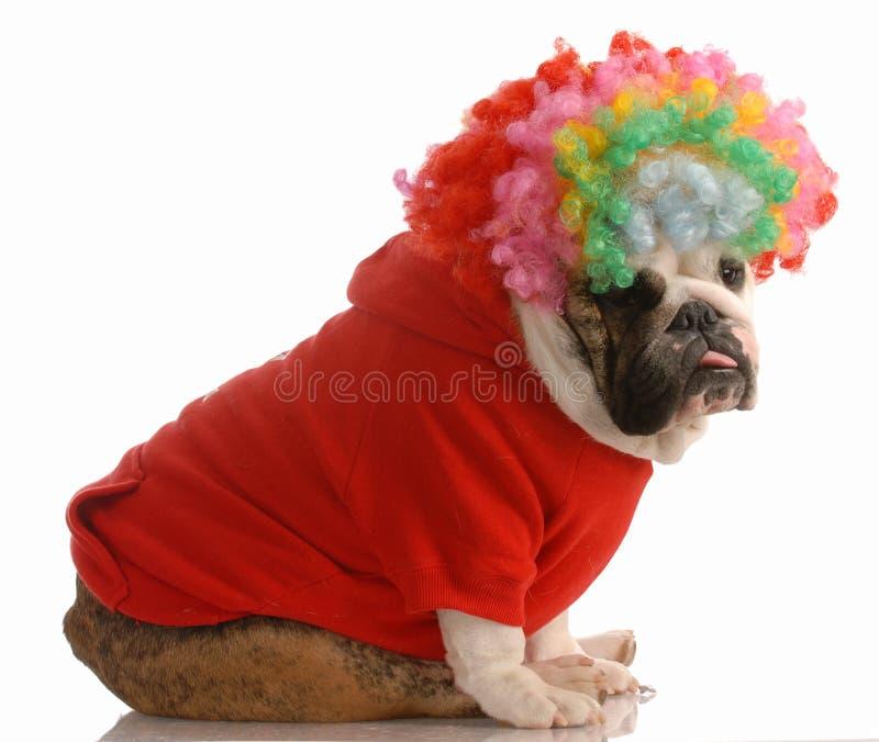 Hond omhoog gekleed als clown royalty-vrije stock foto's