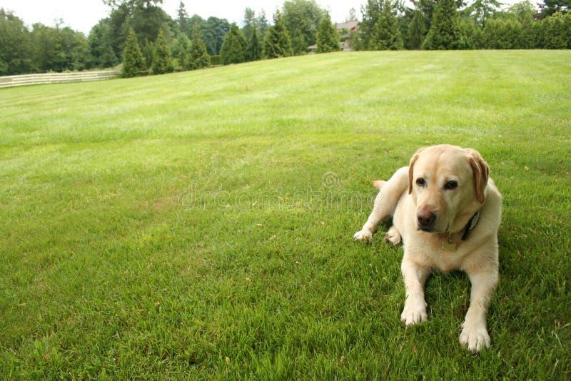 Hond onbeweeglijk royalty-vrije stock afbeeldingen