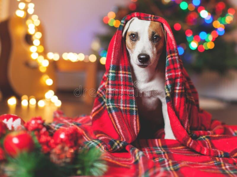 Hond onder een Kerstmisboom royalty-vrije stock fotografie