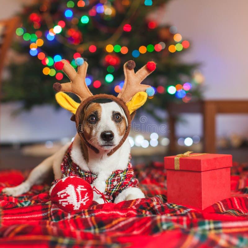 Hond onder een Kerstmisboom royalty-vrije stock afbeelding