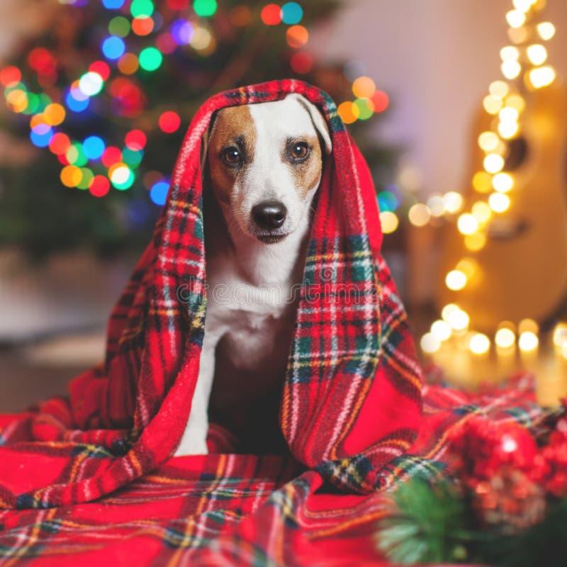 Hond onder een Kerstmisboom stock fotografie