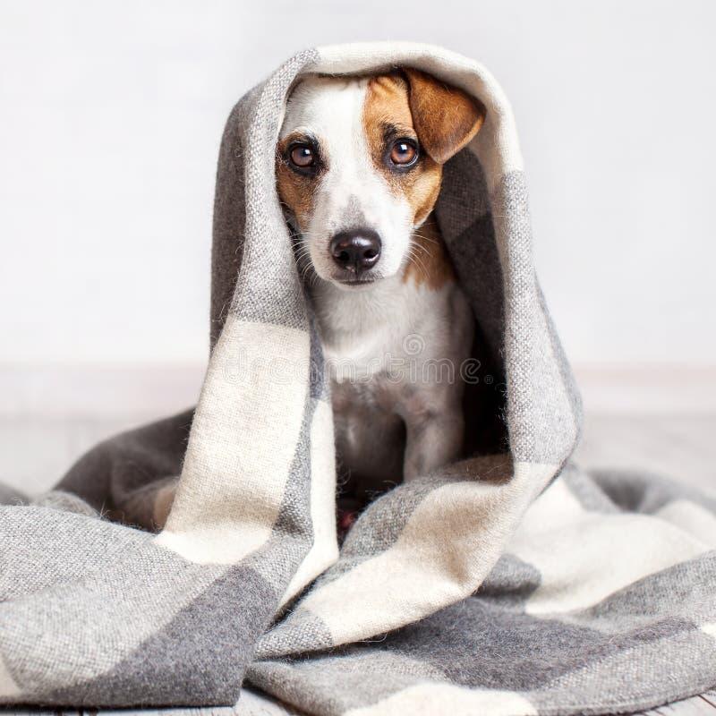 Hond onder een plaid stock foto