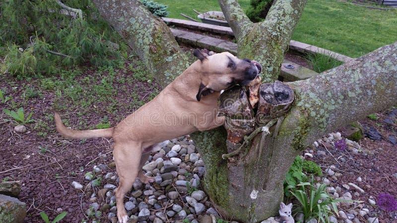 Hond op boom royalty-vrije stock foto