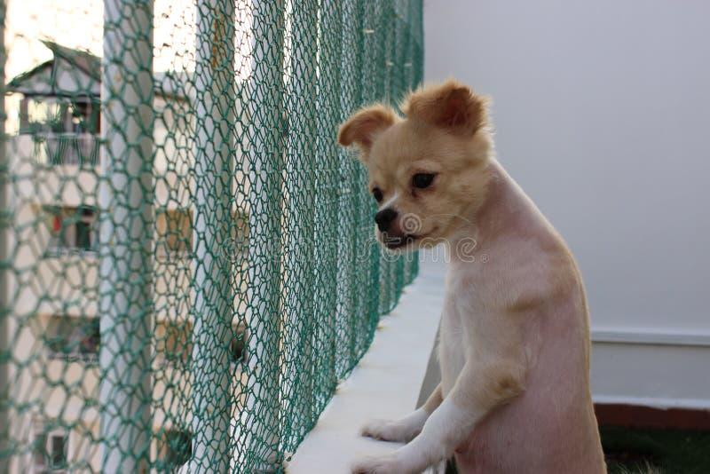 Hond op de bovenkant royalty-vrije stock afbeelding