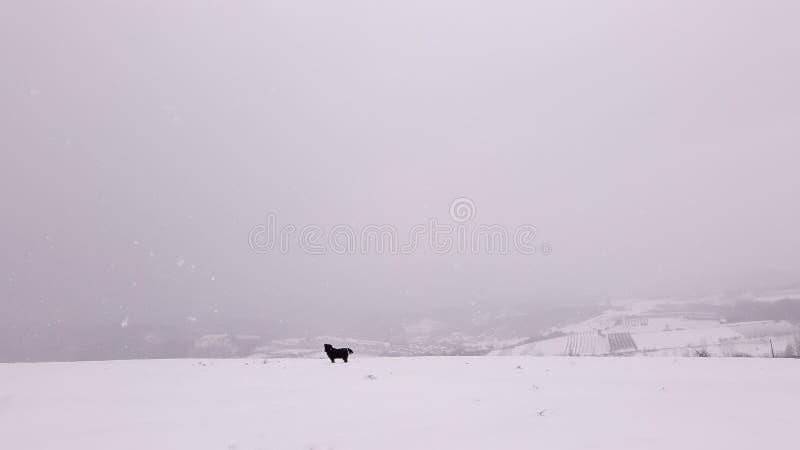 Hond op de dag van de de wintersneeuw royalty-vrije stock foto