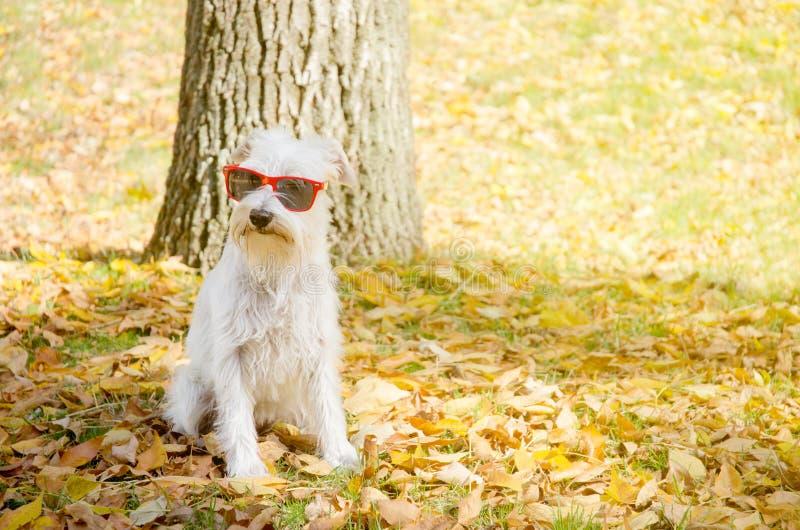 Hond op de de herfstzon royalty-vrije stock fotografie