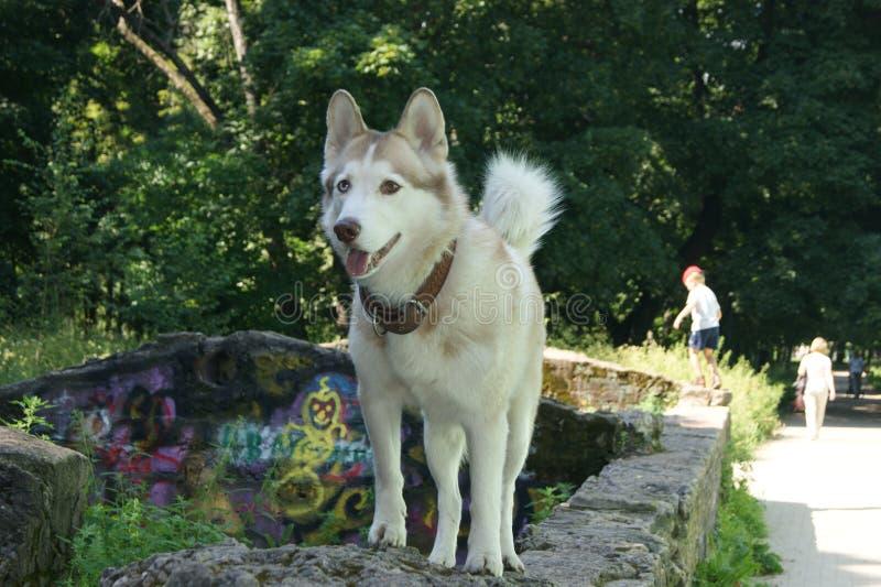 Hond op de gang royalty-vrije stock fotografie